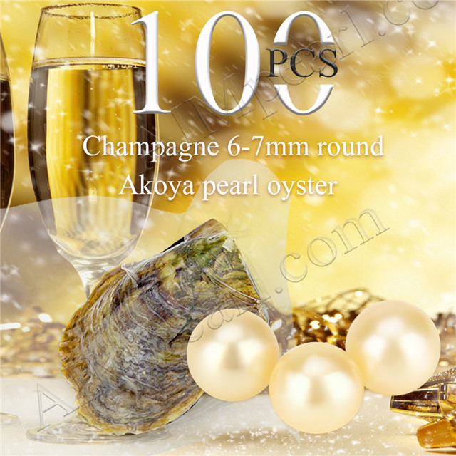 Attractive wholesale 6-7mm saltwater round Akoya Champagne pearl oyster 100pcs